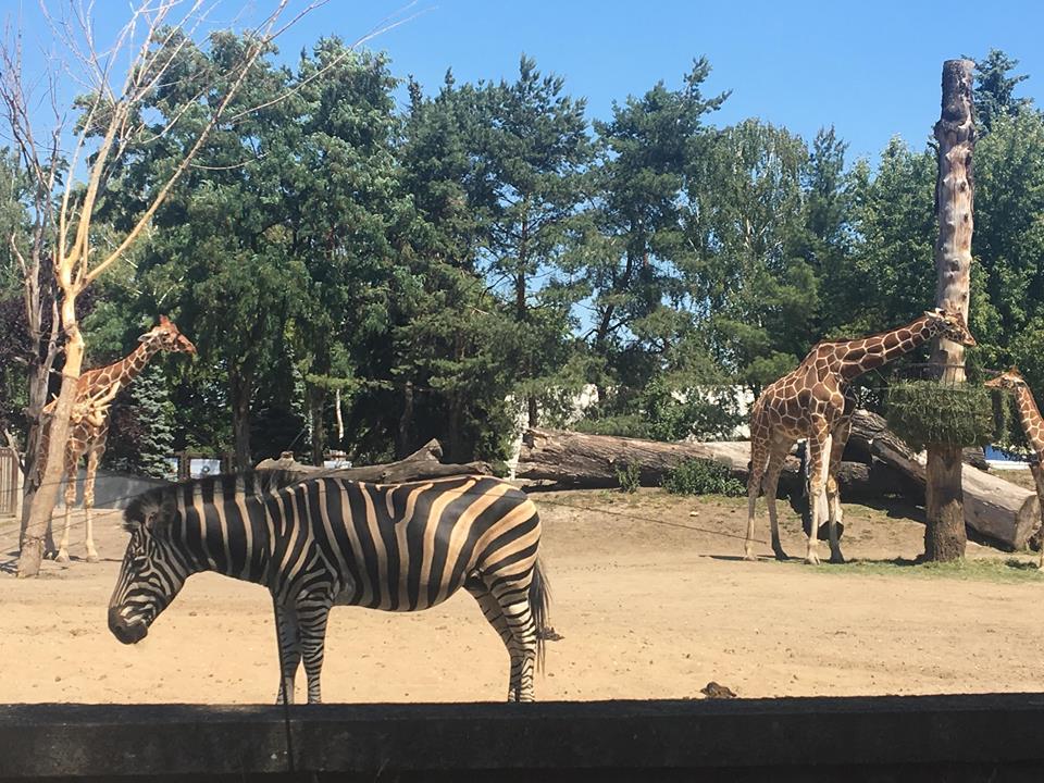 Zoo Wroclaw.jpg